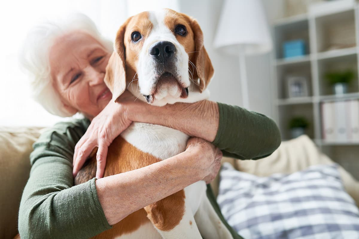 Elegant senior woman, smiling and hugging her beagle in her retirement North Shore apartment.